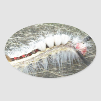 Adesivo Oval O que é ele inseto