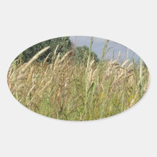 Adesivo Oval Paisagem do verão do campo selvagem no campo