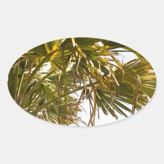 Adesivo Oval Palmeira da costa leste Myrtle Beach famoso