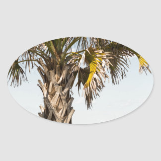 Adesivo Oval Palmeiras no passeio à beira mar da costa leste de