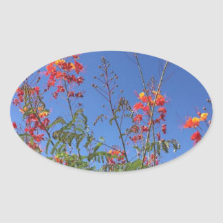 Adesivo Oval Pássaro de paraíso mexicano
