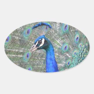 Adesivo Oval Pavão