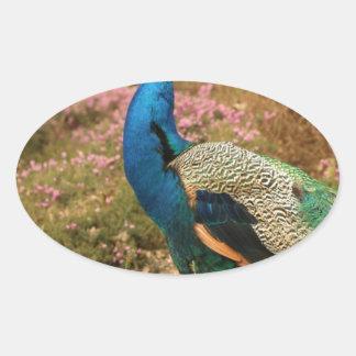 Adesivo Oval Pavão do verde azul e da laranja