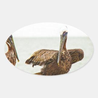 Adesivo Oval Pelicanos empoleirados em cargos