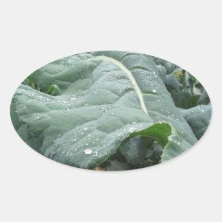 Adesivo Oval Pingos de chuva nas folhas da couve-flor
