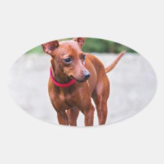 Adesivo Oval Retrato do cão vermelho do pinscher diminuto