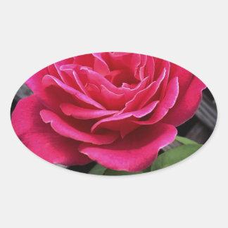 Adesivo Oval Rosa do rosa