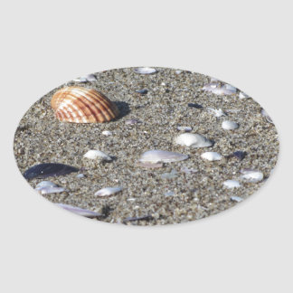 Adesivo Oval Seashells na areia. Fundo da praia do verão