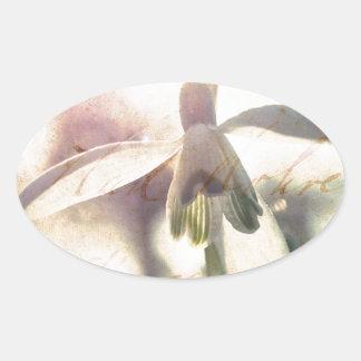 Adesivo Oval Snowdrop 01.01q lírico