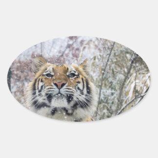 Adesivo Oval Tigre régio na neve
