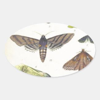 Adesivo Oval Traças e borboletas de Nova Zelândia