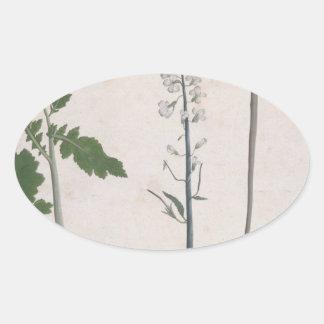 Adesivo Oval Uma planta de rabanete, uma semente, e uma flor