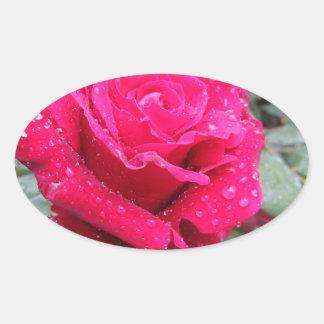Adesivo Oval Única flor da rosa vermelha com gotas de água