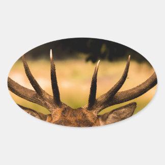Adesivo Oval veado do parque de richmond