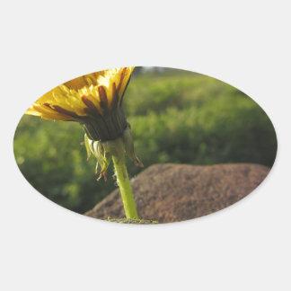 Adesivo Oval Wildflower amarelo que cresce em pedras no por do