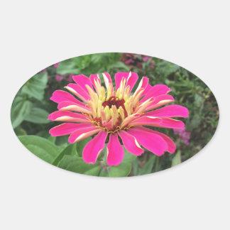 Adesivo Oval ZINNIA - cor-de-rosa e de creme vibrantes -
