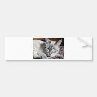 Adesivo Para Carro Animal de estimação da cavala de Mieze do gatinho