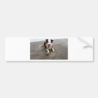 Adesivo Para Carro Border collie na praia