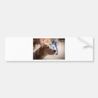 Adesivo Para Carro cão