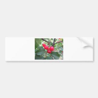 Adesivo Para Carro Cerejas vermelhas de Montmorency na árvore no