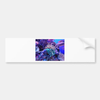 Adesivo Para Carro coral-1053837