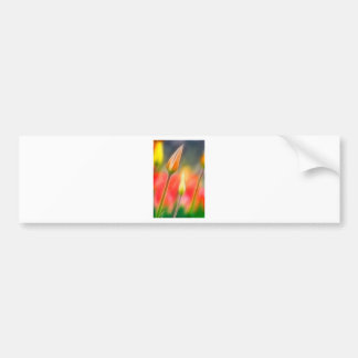 Adesivo Para Carro Esboço vermelho e amarelo da tulipa