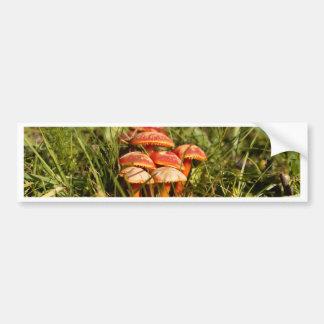 Adesivo Para Carro Escarlate dos fungos da capa, coccinea do