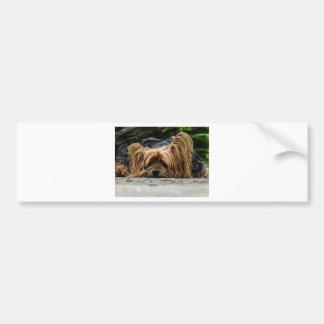 Adesivo Para Carro Filhote de cachorro bonito de Yorkshire