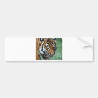 Adesivo Para Carro Fim-acima do tigre do Malay dos alugueres