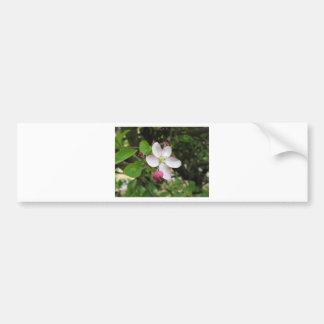 Adesivo Para Carro Flor cor-de-rosa da maçã no primavera. Toscânia,