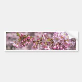 Adesivo Para Carro Flores de cerejeira
