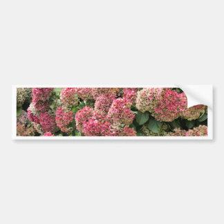 Adesivo Para Carro Flores de um hydrangea do francês (macrophyl do