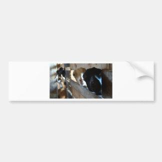 Adesivo Para Carro Foco da cabra