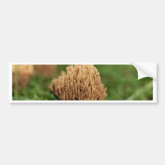 Adesivo Para Carro Fungos corais de mancha verdes (abietina de