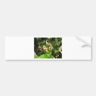 Adesivo Para Carro Galho da árvore de pera com os botões no primavera