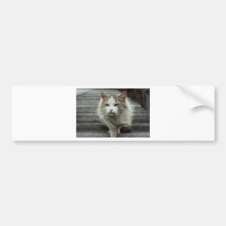 Adesivo Para Carro gato