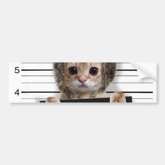 Adesivo Para Carro gato do mugshot - gato louco - gatinho - felino