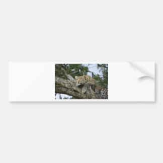 Adesivo Para Carro Gato selvagem animal do safari de África da árvore