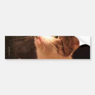 Adesivo Para Carro Gatos e luzes - gato do Natal - árvore de Natal