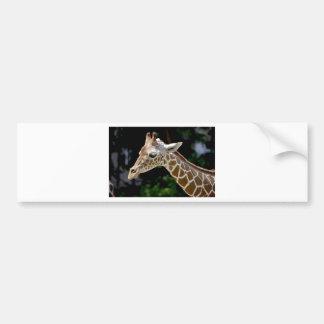Adesivo Para Carro Girafa de Brown durante o dia