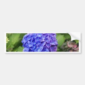 Adesivo Para Carro Hydrangea francês (macrophylla do Hydrangea)