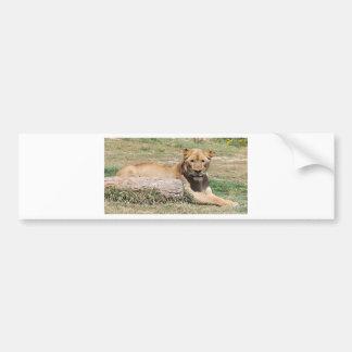 Adesivo Para Carro Leão