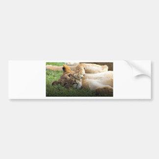 Adesivo Para Carro Leão Cub africano