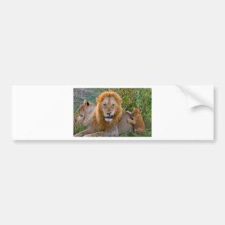 Adesivo Para Carro Leão Cub bonito que joga com pai, Kenya