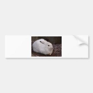 Adesivo Para Carro Lebre animal da pele do mundo animal do jardim