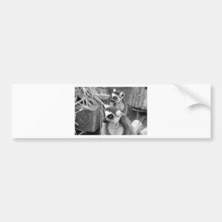 Adesivo Para Carro lemur Anel-atado com o bebê preto e branco