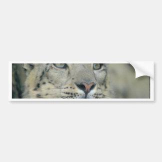 Adesivo Para Carro leopardo de neve