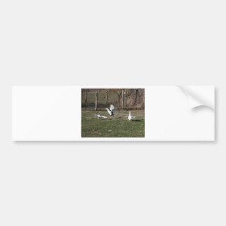 Adesivo Para Carro Luta dos gansos