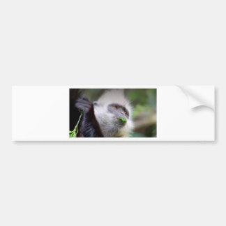 Adesivo Para Carro Macaco africano