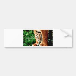 Adesivo Para Carro O tigre Cub de Bengal espreita para fora